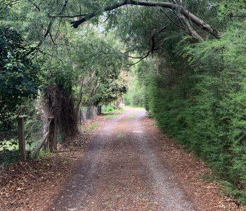 Long road through tall trees.